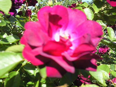 All About Roses And Green Leaves I Art Print by Daniel Henning