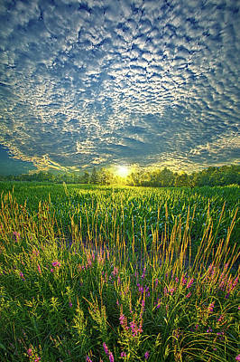 Photograph - All At Once by Phil Koch