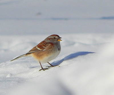 Sparrow Photograph - All By Myself by Karen Cook