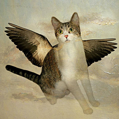 Photograph - All Cats Have Wings by Diana Angstadt