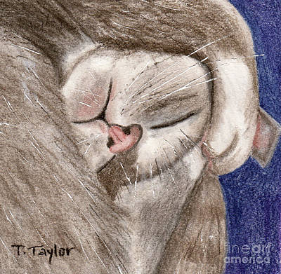 Drawing - All Curled Up by Terry Taylor