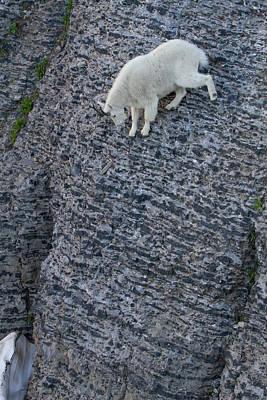 Photograph - All Downhill by Kent Keller