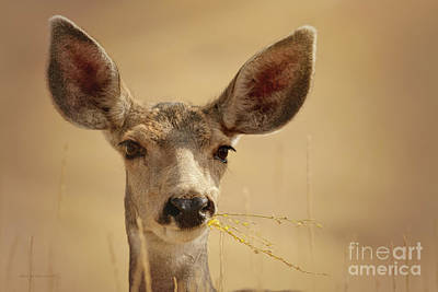 Photograph - All Ears by Beve Brown-Clark Photography
