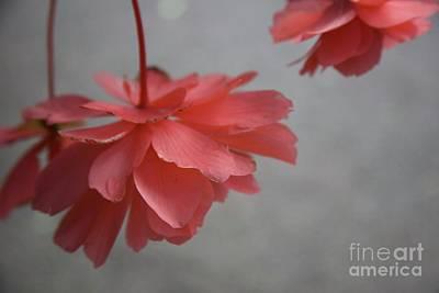Photograph - All Fair Things Must Fade .... by Lynn England