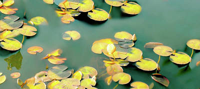 Photograph - All Frogs Matter by Diana Angstadt
