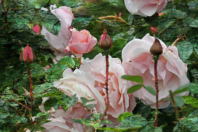 Photograph - All In Bloom - Roses - Garden by Marie Jamieson