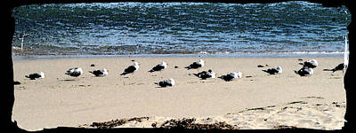 All My Gulls In A Row Art Print by Ellen Lerner ODonnell