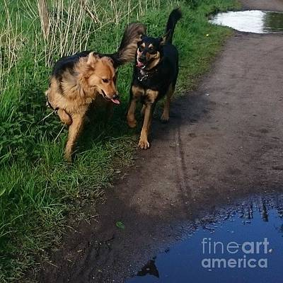 Dog Photograph - All Play And No Work! #dogs #gsd by Isabella F Abbie Shores FRSA