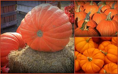 Photograph - All Pumpkins Big And Small by Dora Sofia Caputo Photographic Design and Fine Art