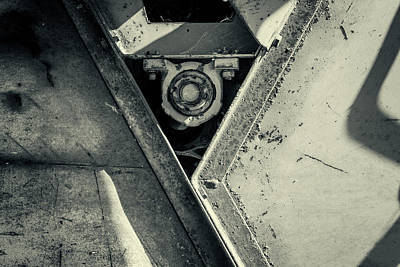 Photograph - All Seeing Nut by John Williams