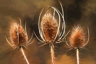 Photograph - All That Remains - Teasel by Donna Kennedy