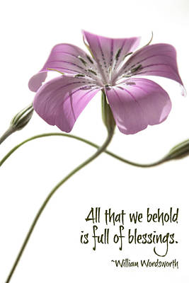 Agrostemma Githago Wall Art - Photograph - All That We Behold by Beth Buelow
