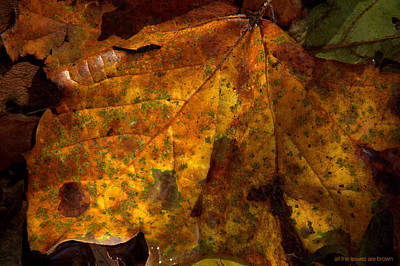 Photograph - All The Leaves Are Brown by Ed Smith