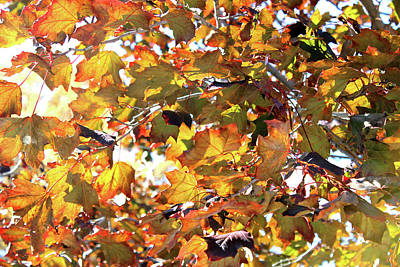 All The Leaves Are Red And Orange Fall Foliage With Sunshine Art Print by Design Turnpike