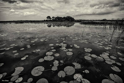 Photograph - All The Lily Pads by Fran Gallogly