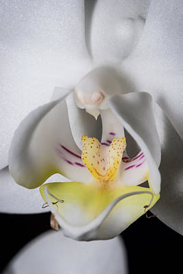 Photograph - All The Parts Of An Orchid by Bob VonDrachek
