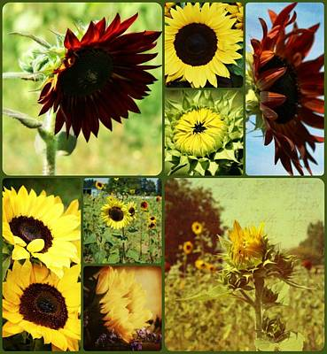 Floral Digital Art Digital Art - All The Sunflowers by Cathie Tyler