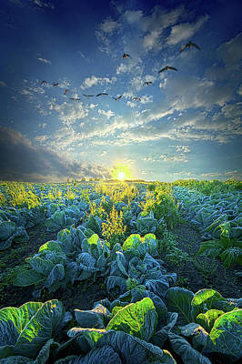 Photograph - All The Works Of Your Hands by Phil Koch