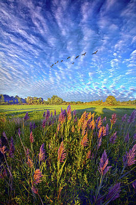 Photograph - All Things Created And Held Together by Phil Koch