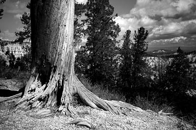 Tree Roots Photograph - All This Time by Mike Irwin