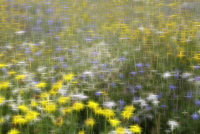 Blurred Digital Art - All Those Flowers by Kevin Round