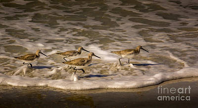 Sandpiper Photograph - All Together Now by Marvin Spates