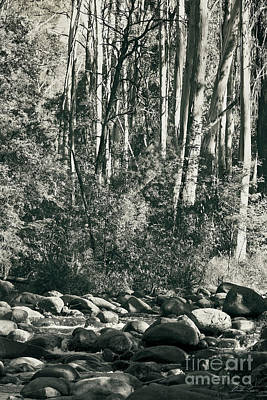 Gumtree Photograph - All Was Tranquil by Linda Lees