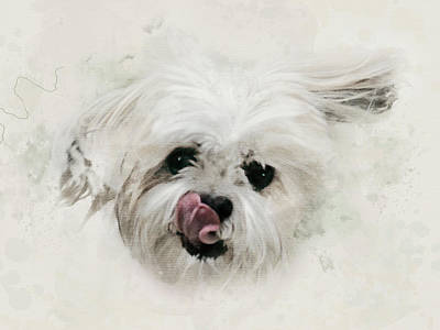 Watercolor Pet Portraits Digital Art - All Wet - Shih Tzu Watercolor by Rayanda Arts