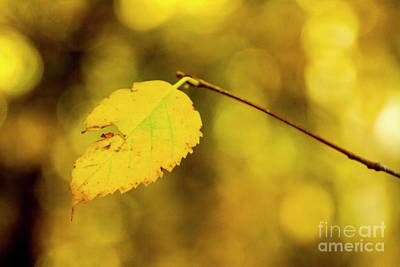 Photograph - All Yellow by Steve Triplett
