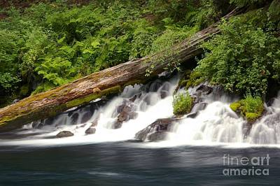 Photograph - Allen Springs On The Metolius River by Rick Bures