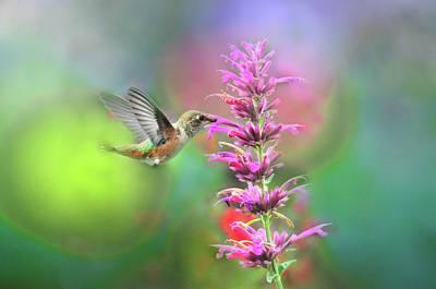 Photograph - Allen's Hummingbird In Light Bubbles by Lynn Bauer