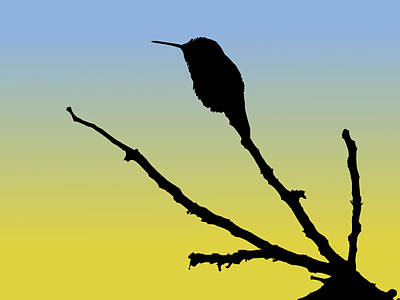 Drawing - Allen's Hummingbird Silhouette At Sunrise by Marcus England