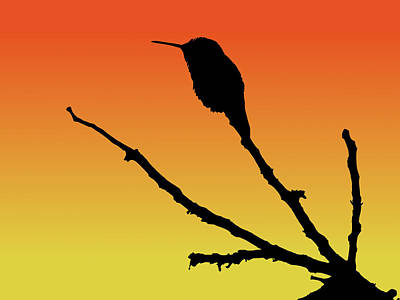 Drawing - Allen's Hummingbird Silhouette At Sunset by Marcus England