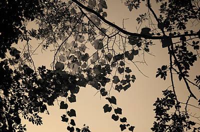 Photograph - Allens Pond I Toned by David Gordon