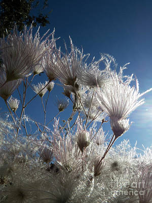 Photograph - Allergy Season by Christy Garavetto