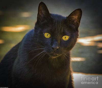 Photograph - Alley Cat by Mitch Shindelbower
