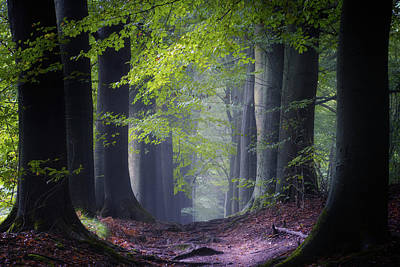 Of Trees Photograph - Alley Of Replenish Energy by Janek Sedlar