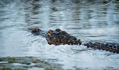 Photograph - Alli-gator  by Saija Lehtonen