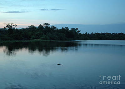 Photograph - Alligator Afternoon by Kathi Shotwell