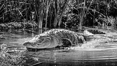 Photograph - Alligator Bags Of Port Aransas by Debra Martz
