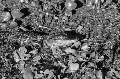Photograph - Alligator Camo by Joseph Caban