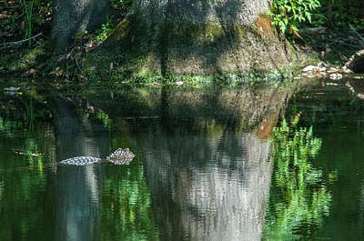 Photograph - Alligator Canal by Brian Green