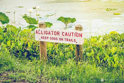 Photograph - Alligator Caution by Teresa Blanton