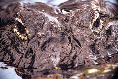 Alligator Photograph - Alligator Close Up by Mark Andrew Thomas