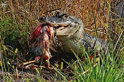 Photograph - Alligator Eating A Fish by Ira Runyan