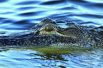 Photograph - Alligator Eye by Deborah Benoit