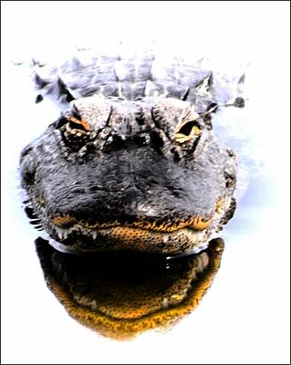 Photograph - Alligator Fangs 2 by Sheri McLeroy