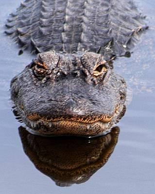 Photograph - Alligator Gator Fangs 1 by Sheri McLeroy