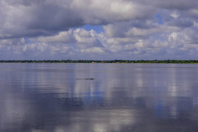 Crocodile Photograph - Alligator In Tranquility  by Zina Stromberg