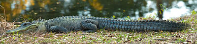 Photograph - Alligator by Joye Ardyn Durham